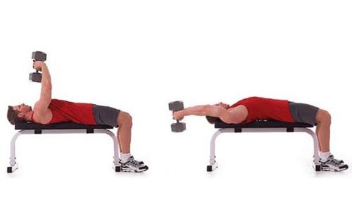 Tập cơ lưng với tạ tay